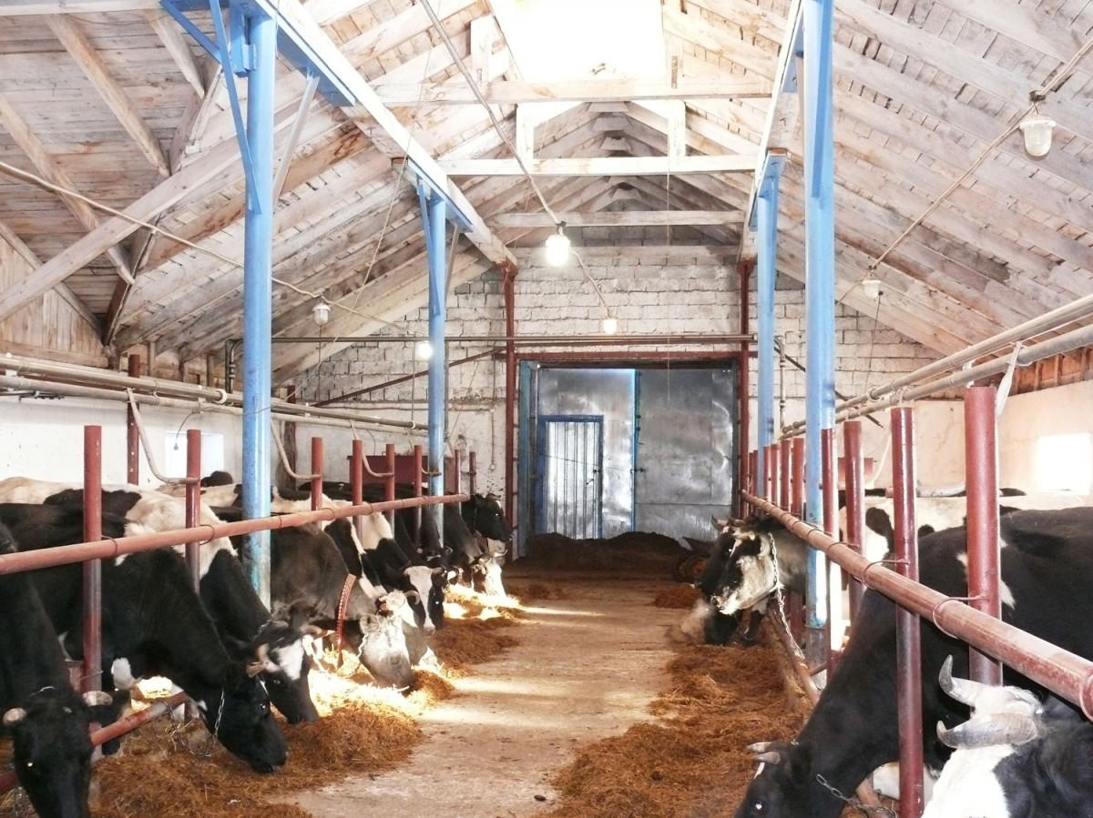 мини фермы крс семейные: