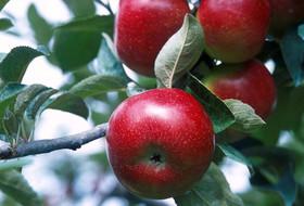 Рацион плодовых культур:  усилен новинками «ПОЛИДОН Агро»