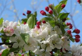 Эффективная защита сада от вредителей