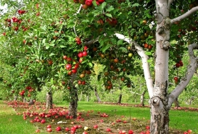 Защита садов: как хорошее сделать лучшим