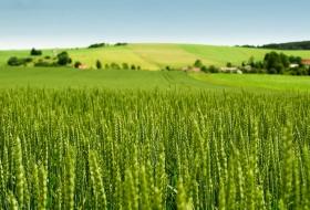 Выше качество семян  – лучше урожай
