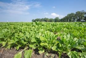 Инновационные агротехнологии как инструмент роста российского АПК