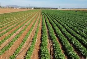 Альбит®: защита от засухи, болезней, пестицидного стресса