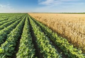 Кубанские аграрии – за новаторский подход