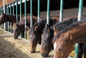 Анемия лошадей