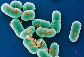 Опасное инфекционное заболевание – Листериоз