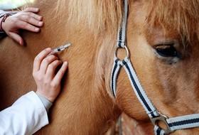 Профилактика инфекционной анемии лошадей