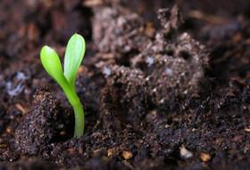 Мощный удар по фитопатогенам и… растительным остаткам