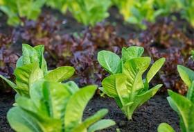 Гуминовые удобрения для сельского хозяйства