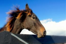 Меры борьбы со вшами у лошадей