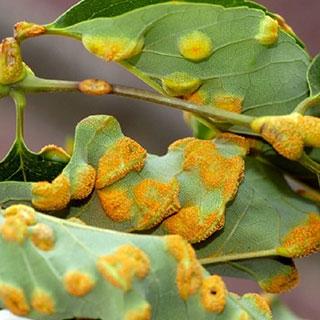 LOOK: идентифицируйте вредителей, заболевания растений и защищайте урожай