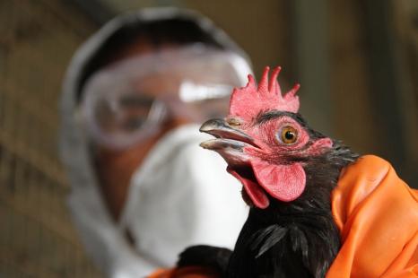 О мерах профилактики гриппа птиц