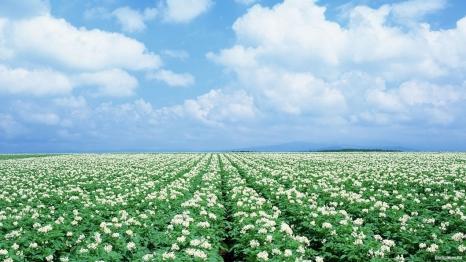 Как повысить устойчивость овощных культур к засухе?