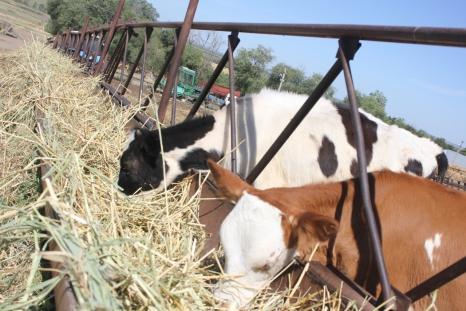 В помощь начинающим фермерам