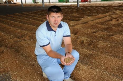 Краснодарские сорта пшеницы покоряют Россию
