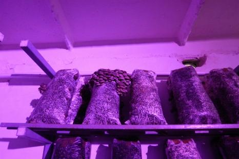 Фитолампы для грибов