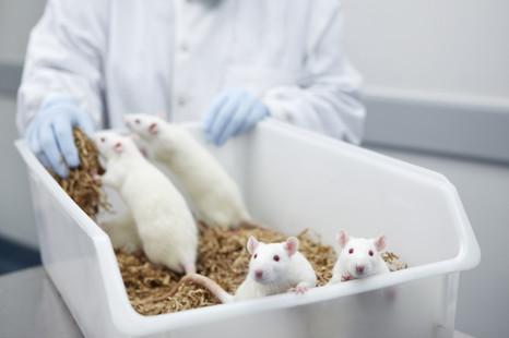 Превентивные лечебные мероприятия в борьбе с паразитарными заболеваниями лабораторных животных
