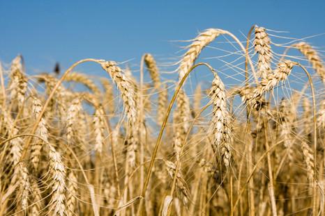 Препараты «Щелково Агрохим» в условиях нулевой почвообработки