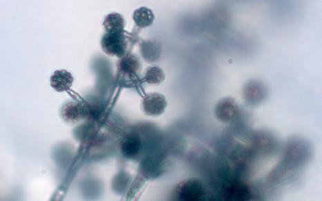 Эффективное применение биологических препаратов в борьбе с корневыми и прикорневыми гнилями