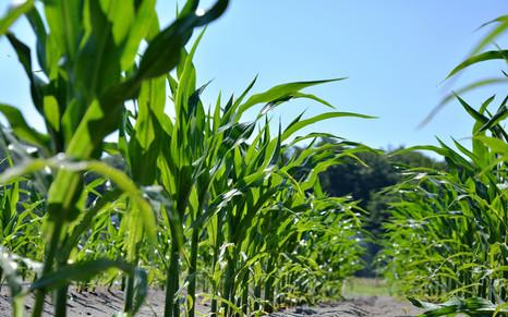Правильный выбор гибрида – основа урожаев