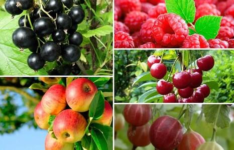 Признаки карантинных заболеваний плодово-ягодных культур