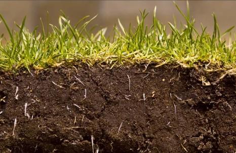 Самоочищение и санитарная охрана почвы