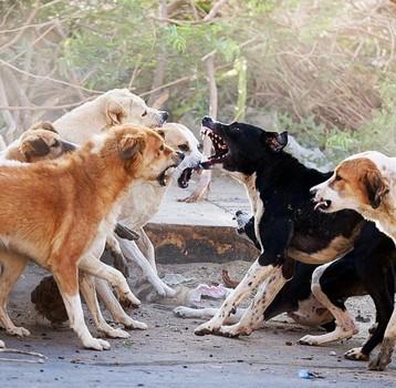 Бродячие собаки – источник вирусного заболевания «Бешенство»