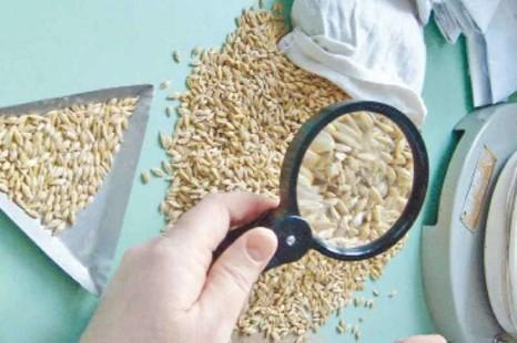 Фитосанитарное состояние семян озимых культур под урожай 2022 года