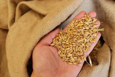 Семена как фактор повышения урожайности