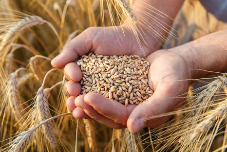 Новый биопрепарат для обработки семян от Corteva Agriscience