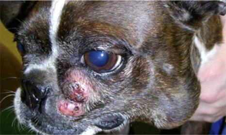 О возможности проведения гистологических исследований новообразований у животных