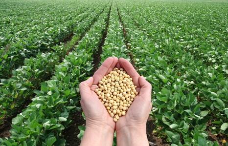 Выгодная соя. Геномная селекция, агротехнологии – залог богатых урожаев