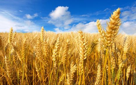 Новые фунгициды от «Агротек»: скоро на российском рынке