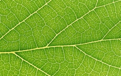 Функциональная листовая диагностика как инструмент для регулирования питания растений