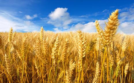 «Валагро»: как запрограммировать посевы на высокий урожай