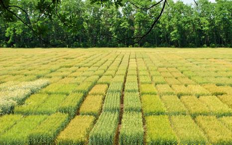 Отечественные семена – гарантия продовольственной безопасности