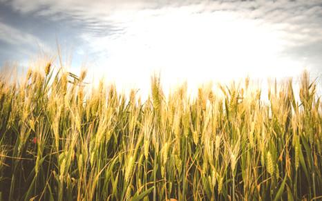 Обработка семян яровых культур
