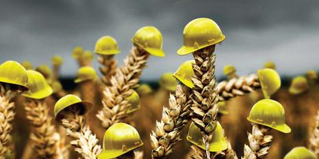 Страховая защита для урожая