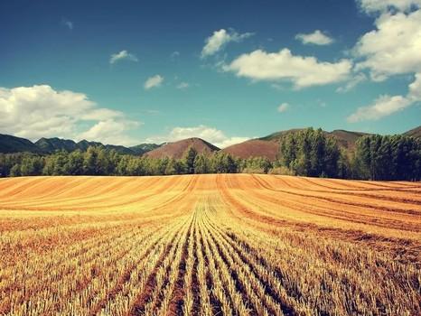 Чтобы почва была здоровой, а расходы на удобрения – низкими