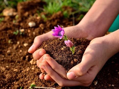 Исследования почв в рамках государственного задания
