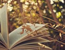 Информация о вступлении в силу нормативно-правовых актов, регламентирующих деятельность в области семеноводства сельскохозяйственных растений и карантина растений