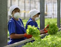 Зарплата ростовских аграриев выросла еще на 11 процентов