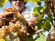 Садоводы и виноградари ждут гостей
