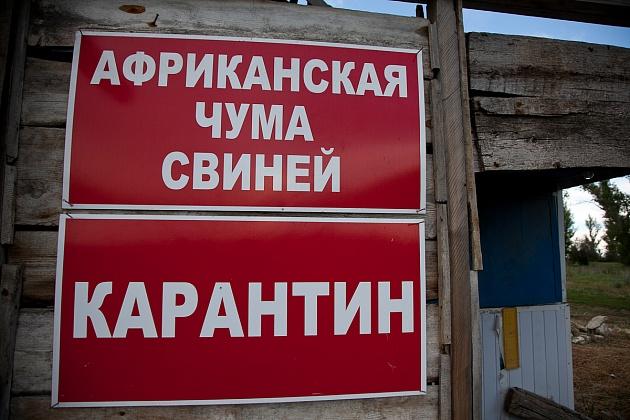 Чума на хуторе близ Суровикина