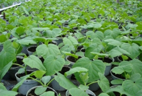 Средства и методы защиты растений от болезней