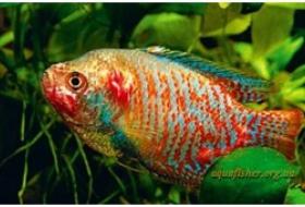 О болезни аквариумных рыбок