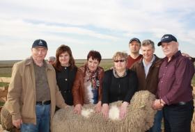 Законодатели мод в овцеводстве