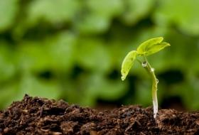 Закладываем основу под новый урожай