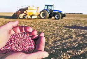 Фитоэкспертиза и качественное протравливание – залог высоких урожаев