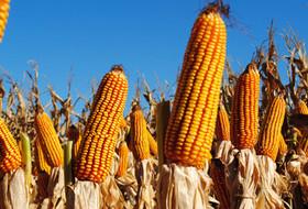 «Щелково Агрохим» как стать успешным в сельском хозяйстве